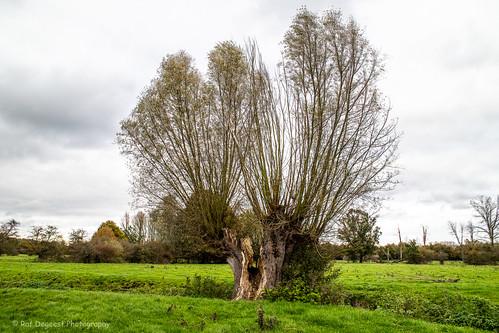november willow