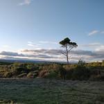 Forêt domaniale du Baillarguet - Photo de Clapiers (France) le 05/11/2019