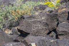 Petroglyphs at Piedras Marcadas petroglyph site in Albuqurque-51 10-10-19