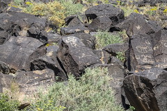 Petroglyphs at Piedras Marcadas petroglyph site in Albuqurque-60 10-10-19
