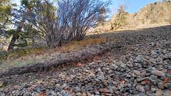 Mitchell Point, Columbia Gorge