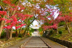 Bishamon-do, Approach and Chokushi-mon (Gate) -1 (November 2019)