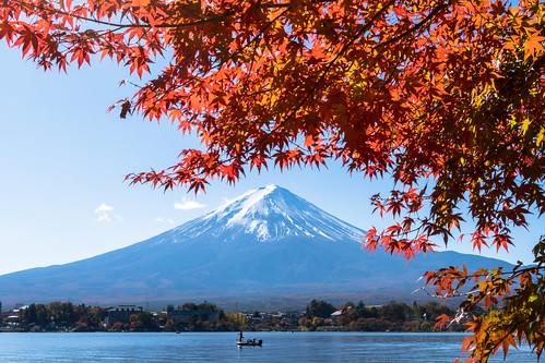 Autumn Red leaves at Lake Kawaguchi