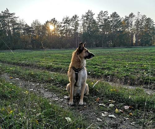 Bald wird es dunkel, ein letzter Blick über die Felder, dann geht es zurück.