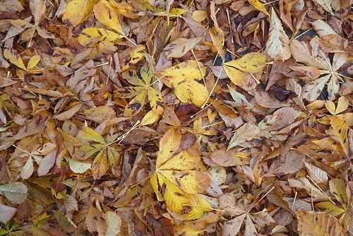Autumn underfoot
