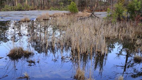 Ye Olde Frog Pond