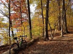 2019 Bike 180: Day 174 - Golden Afternoon