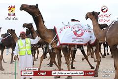 صور منافسات مهرجان قطر الثالث للمجاهيم والوضح (شوط الجمل 35) مفتوح 18-11-2019
