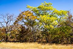 2019 Zimbabwe, Hwange National Park