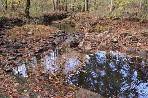 Creek through the Woods