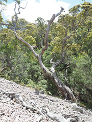 Mountain Scenery - Mt Toolbrunup, Stirling Ranges, Western Australia