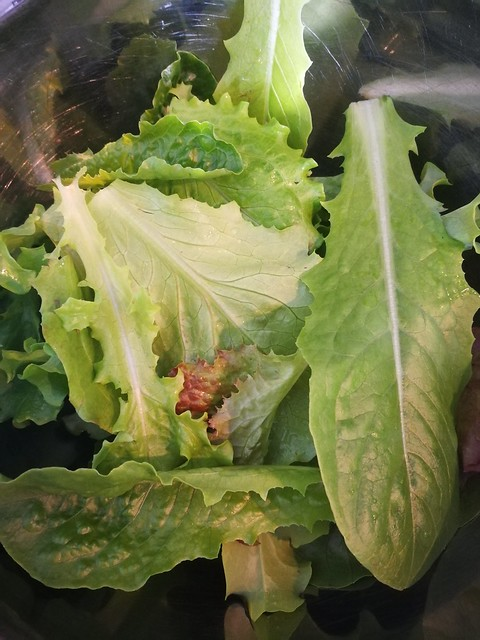mesclun lettuces