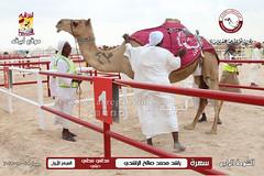 صور منافسات مهرجان قطر الخامس عشر للأصايل (أشواط المداني) صباح 19