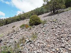 Scree Slope - Mt Toolbrunup, Stirling Ranges, Western Australia