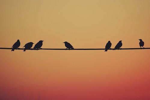 Dawn / Morning chat