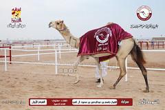الصور .. منافسات مهرجان قطر الخامس عشر للأصايل (أشواط الخلفات) مساء 19-11-2019