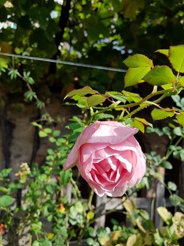 Une fleur est un être entièrement poétique