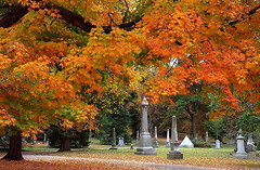 "Cincinnati - Spring Grove Cemetery & Arboretum ""Another Autumn Walk"""