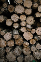 Pieces of wood logs stack wall as a background