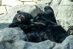 Black Bear Being Silly