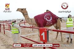 الصور .. منافسات مهرجان قطر الخامس عشر للأصايل (أشواط المعاشير وحيل وعشاير) صباح 20-11-2019