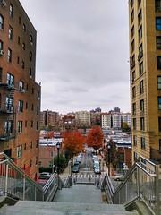 Autumn in the Bronx. NY