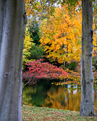 Autumn by the Lake!