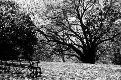 Parkland (Autumn)