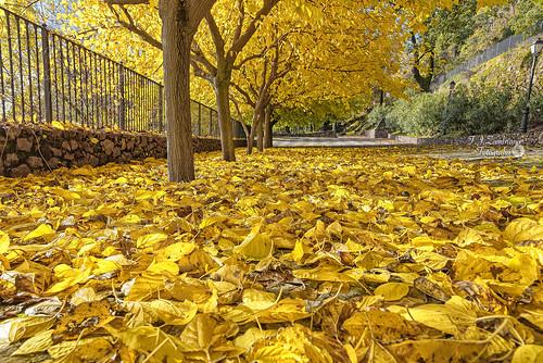 Autumn :: Expired Leaf ..