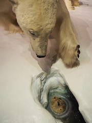 Polar Bear and Seal - Museum of Nature