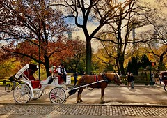 Horsing around - Central Park, New York City