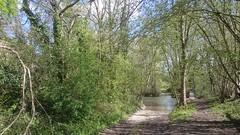 CANAL DE BOURGOGNE 019