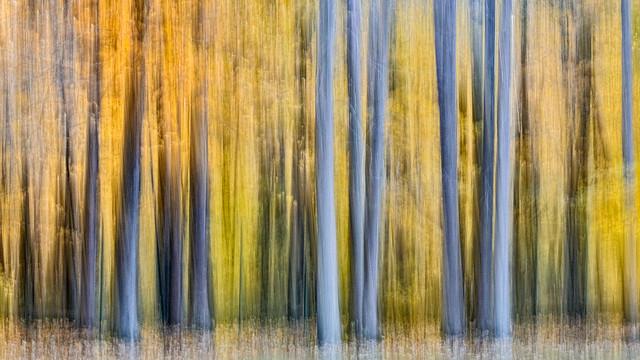Forêt de novembre