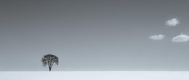 L'orme sédentaire et ses nomades