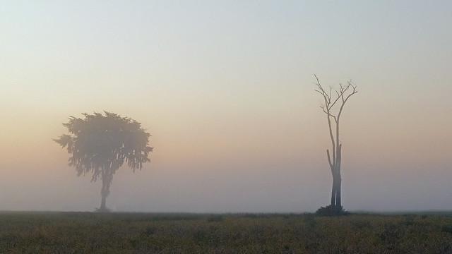 Duo solitaire et brouillard