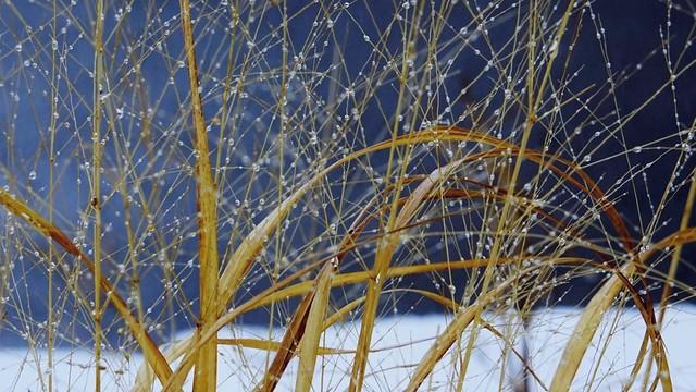 Délicatesse hivernale