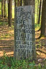 DSC07042.jpeg - Kunst im Wald