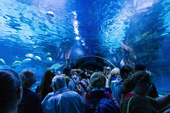 People watching fishes in Tropicarium Budapest