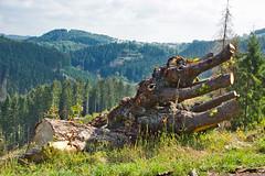 DSC07071.jpeg - Kunst im Wald