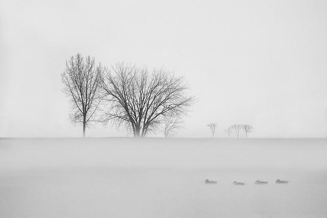 Plumes sur un coussin de brume