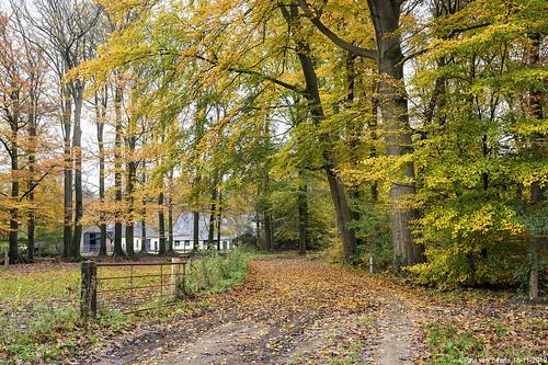 Stille Wald - herfst / autumn, 15-11-2019