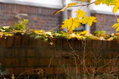 Herbst. Осень.
