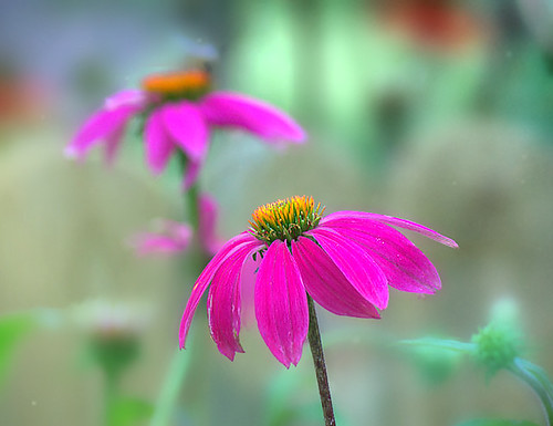 The love of gardening is a seed that once sown never dies