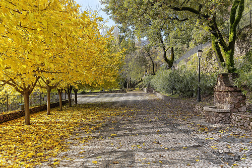 Autumn ::: Deciduous and Perennial Leaves ..