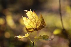 Flower, Garden & Forest