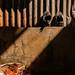 Shoes, Wall and Shadows, Photo Walk #87, Tha Phra