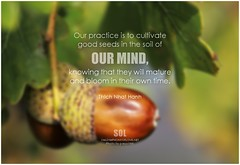Thich Nhat Hanh Our practice is to cultivate good seeds in the soil of our mind, knowing that they will mature and bloom in their own time.