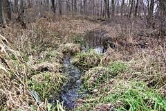Judy Lake Drain