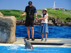 Communication with a Dolphin