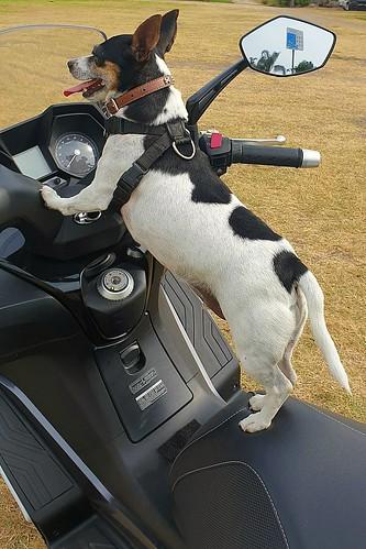 Shanti the bikey bikey boy